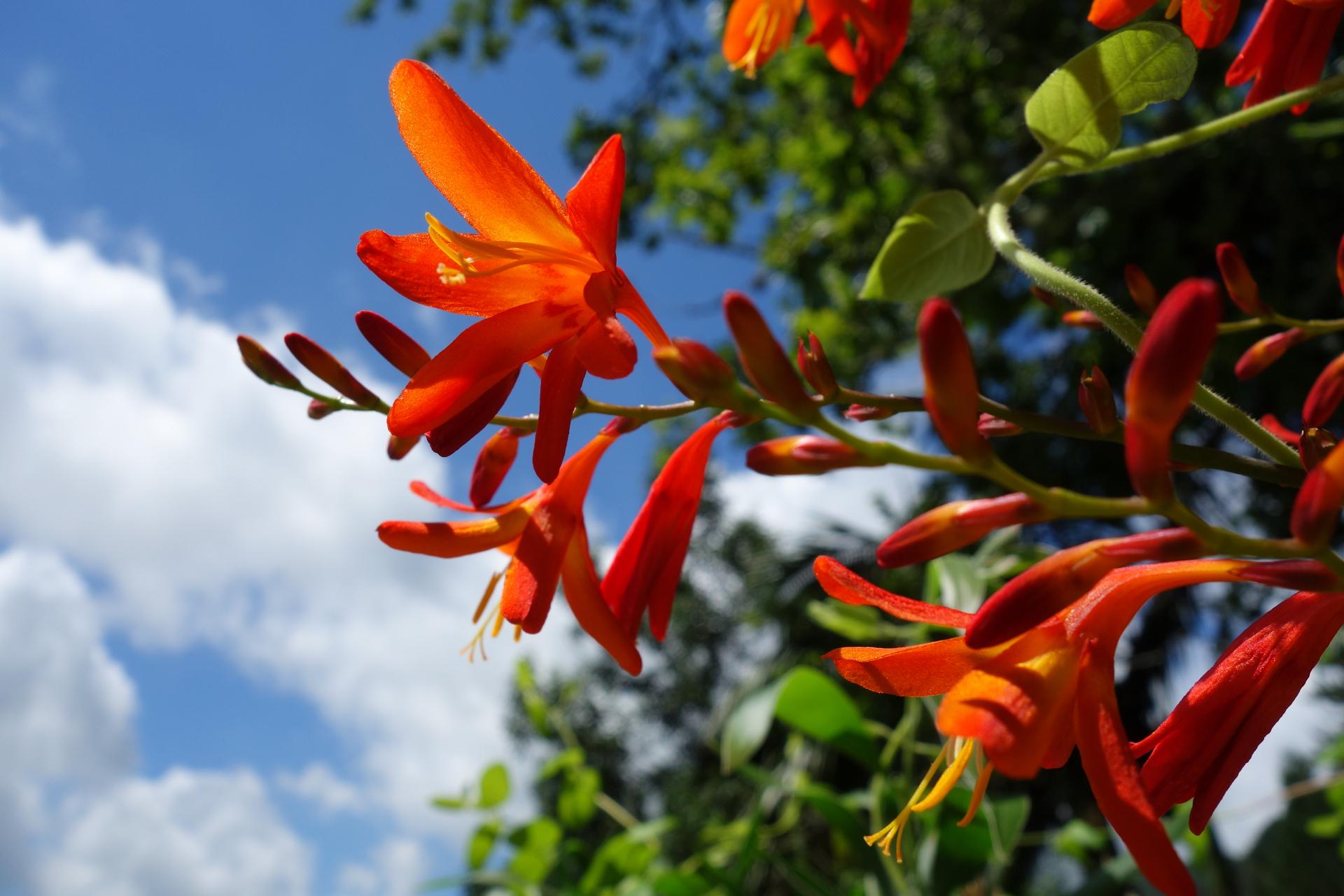 Açores Fleurs
